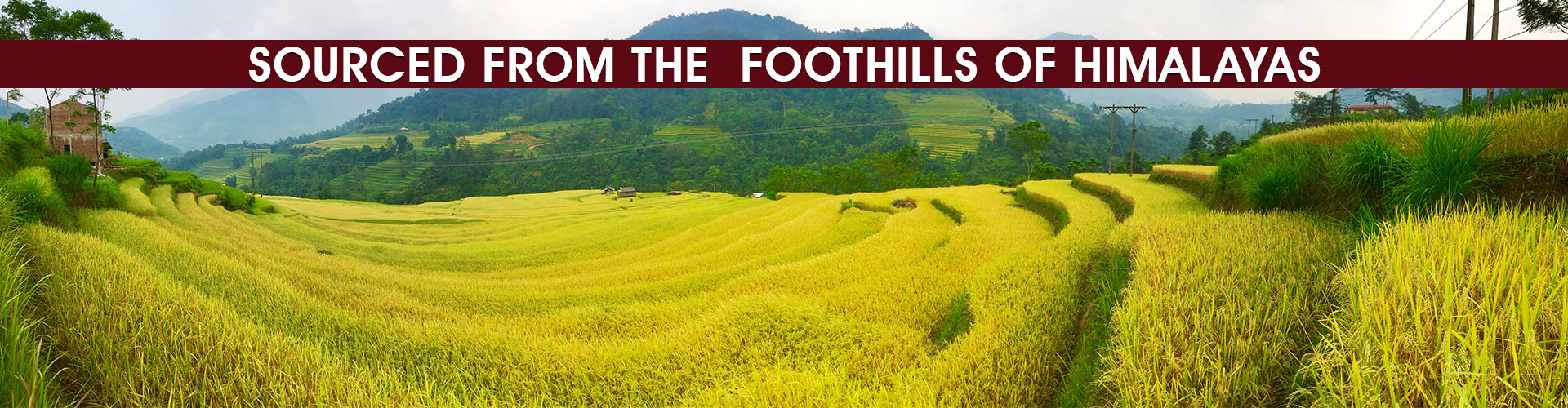 Source Of FootHills Of Himalayas