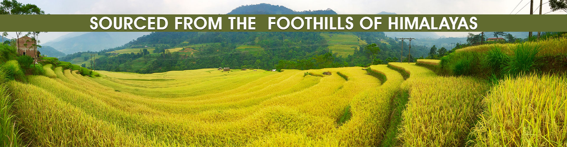 Source From the Foothills Of Himalya